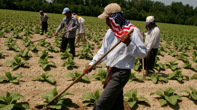 Más de un millón de empleos traería programa 'Sembrando Vida' en Centroamérica: AMLO