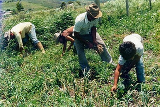 STPS encabeza actualización de norma de salud agrícola