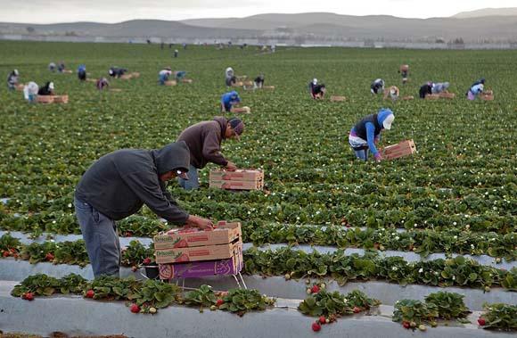 Urge fijar salario mínimo profesional para jornaleros: Conasami